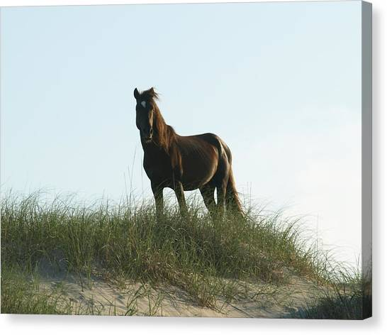 Banker Horse On Dune - 3 Canvas Print