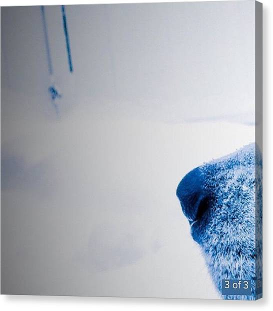 Snowball Canvas Print - Banner Picture 3/3 Check My Gallery For by Diego Gallegos