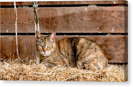 Head Canvas Print - Barn Cat by Jason Freedman