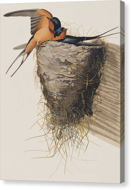 Swallow Canvas Print - Barn Swallow by John James Audubon