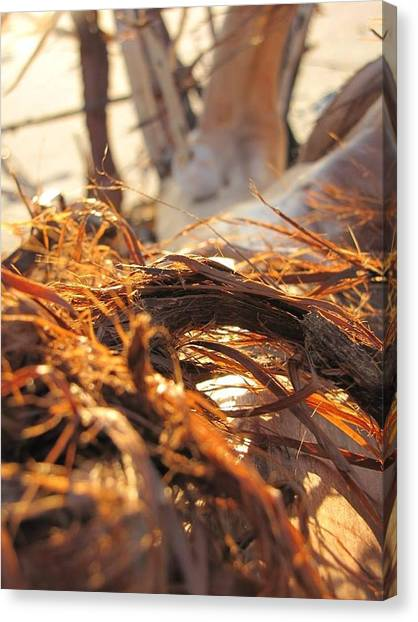 Trout Canvas Print - Beach Wood by Laura Henry
