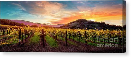 Sonoma Valley Canvas Print - Morning Sun Over The Vineyard by Jon Neidert