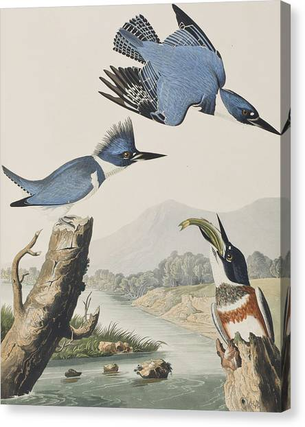 Kingfisher Canvas Print - Belted Kingfisher by John James Audubon