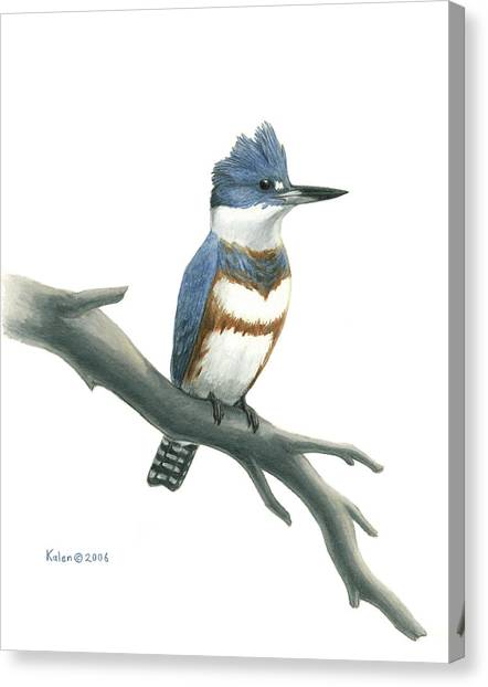 Kingfisher Canvas Print - Belted Kingfisher Perched by Kalen Malueg