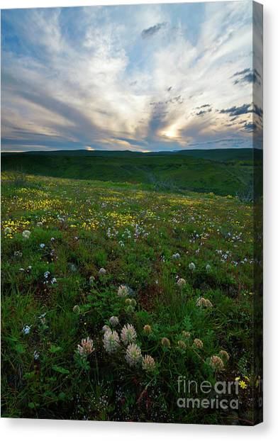 Clover Canvas Print - Big Headed Clover Sunset by Mike Dawson