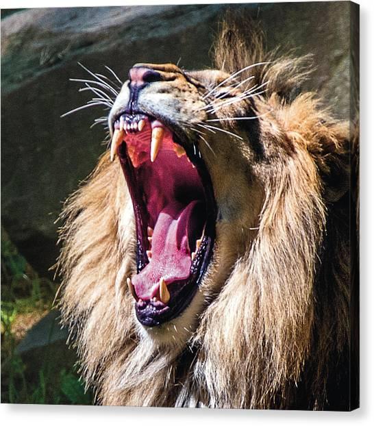 Big Yawn Canvas Print
