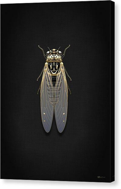 Gold Canvas Print - Black Cicada With Gold Accents On Black Canvas by Serge Averbukh