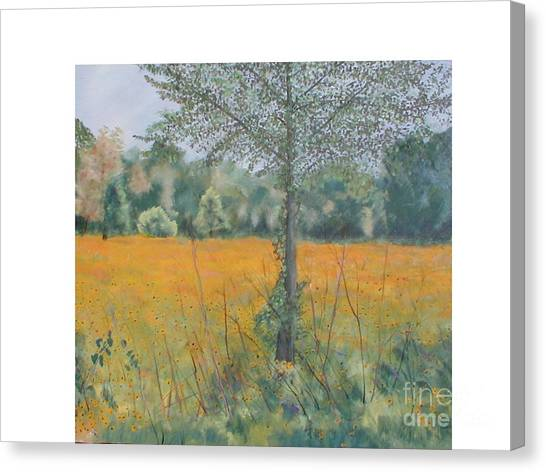 Black Eyed Susans Canvas Print by Hal Newhouser