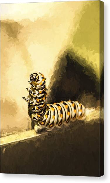 Caterpillers Canvas Print - Dancing Black Swallowtail Butterfly Caterpillar  by Kay Brewer