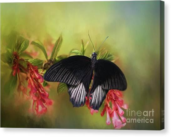 Black Velvet Canvas Print by Eva Lechner