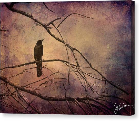 Blackbird 2 Canvas Print by Christine Hauber