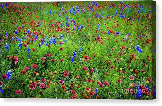 Canvas Print featuring the photograph Blooming Wildflowers 537 by D Davila