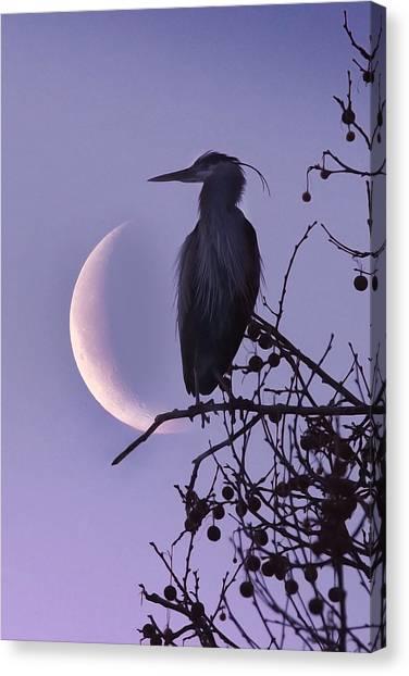 Blue Heron Moon Canvas Print