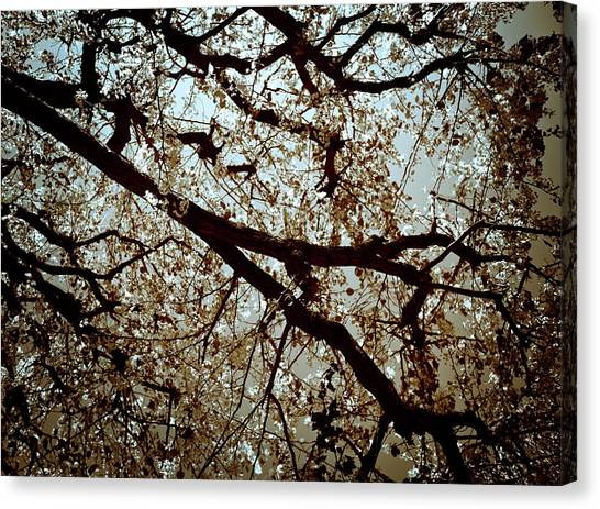 Branch One Canvas Print