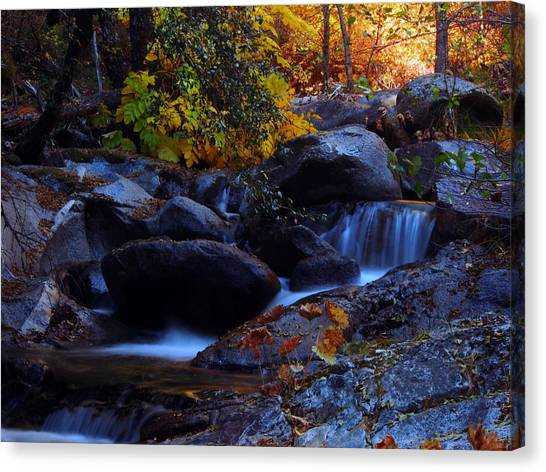 Mossy Forest Canvas Print - Brandy Creek by Michele James