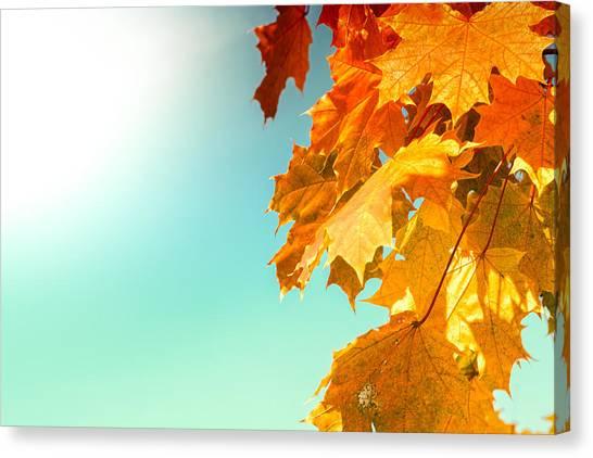 Yellow Autumn White Sun Canvas Print