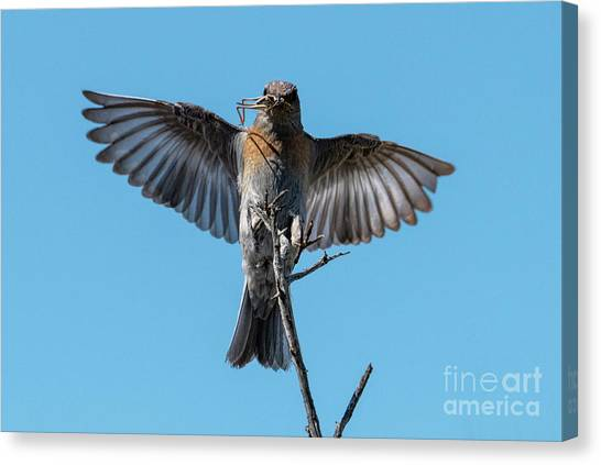 Grasshoppers Canvas Print - Bringing Dinner by Mike Dawson