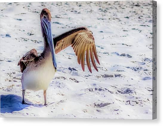 Brown Pelican Wave Canvas Print