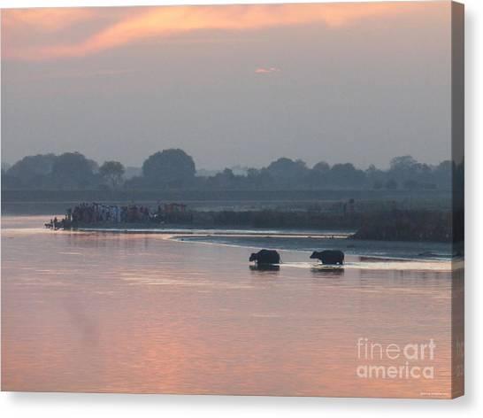 Buffalos Crossing The Yamuna River Canvas Print