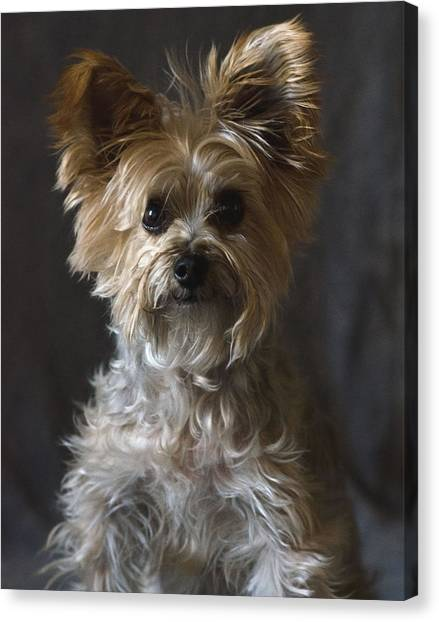 Buster Canvas Print