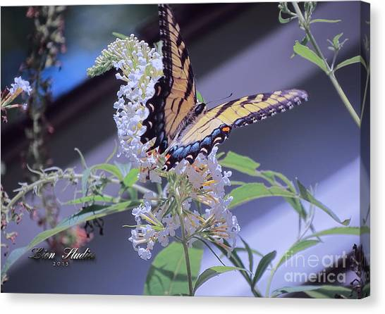 Butterfly Bush ,butterfly Included Canvas Print