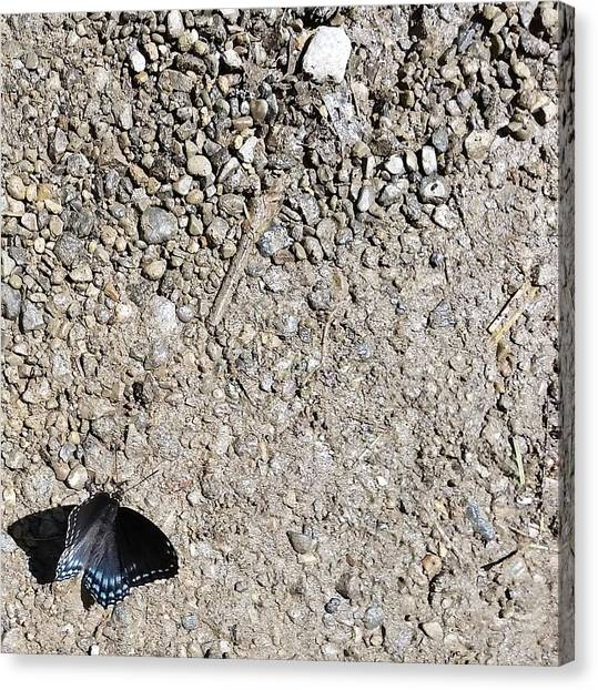 Tigers Canvas Print - Butterfly by Kimberly  W