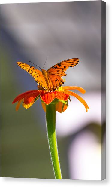 Canvas Print featuring the photograph Butterfly On Flower by Willard Killough III