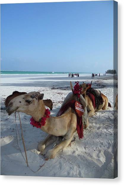 Exploramum Canvas Print - Camel On Beach Kenya Wedding by Exploramum Exploramum