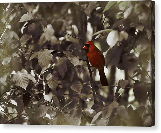 Very Red Cardinal Canvas Print by JAMART Photography