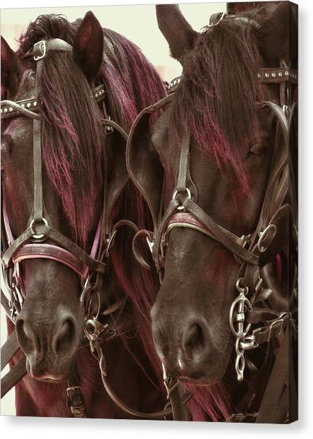 Carriage Ponies  Canvas Print by Dressage Design