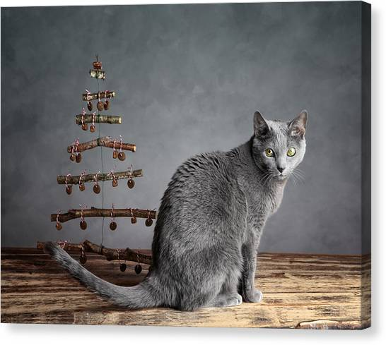 Russian Blue Canvas Print - Cat Christmas by Nailia Schwarz