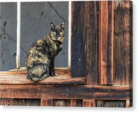 Cat In A Window Canvas Print