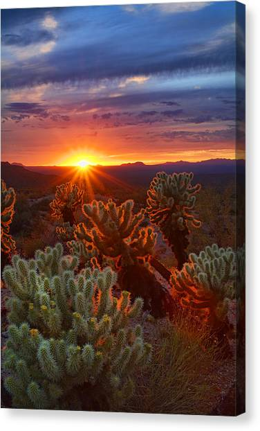 Cholla Sunset  Canvas Print