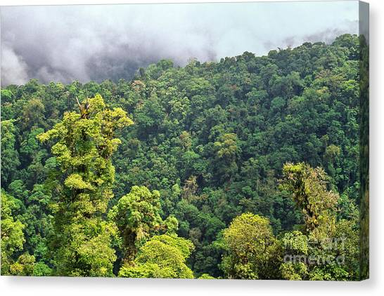 Monteverde Canvas Print - Cloud Forest. Monteverde by Inga Spence