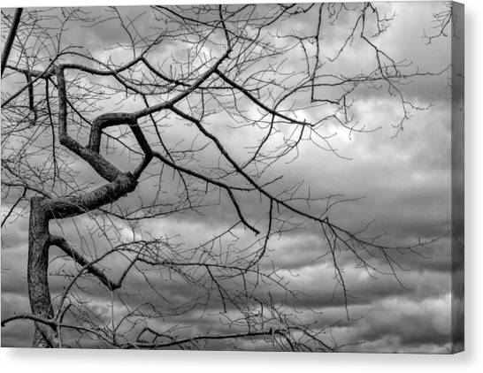Rainclouds Canvas Print - Clouds And Trees by Robert Ullmann