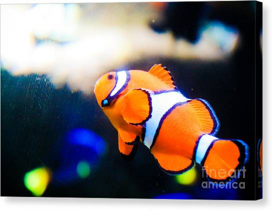 Clownfish Canvas Print by Brenton Woodruff