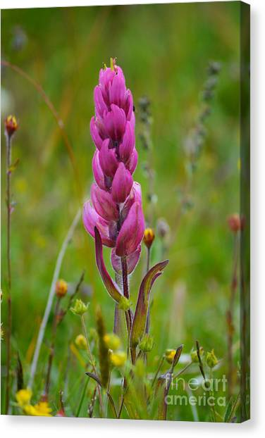 Canvas Print featuring the photograph Colorado Wildflower by Kate Avery