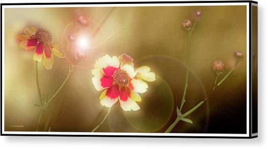 Coreopsis Flowers And Buds Canvas Print