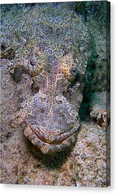 Crocodile Fish Canvas Print