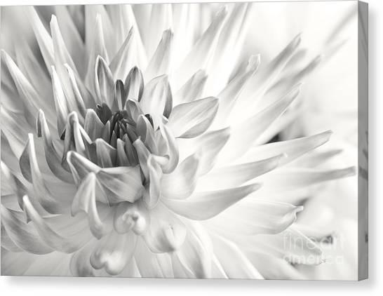 Dahlias Canvas Print - Dahlia by Nailia Schwarz