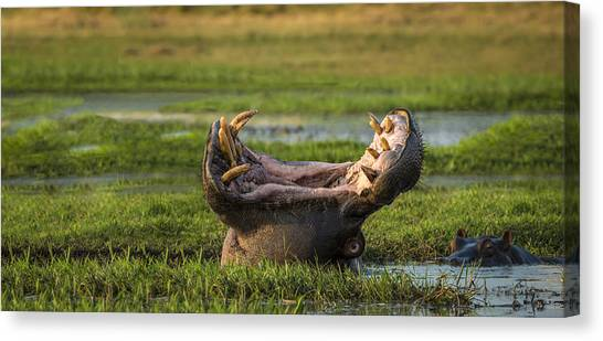 Marshes Canvas Print - Dare To Yawn by Renee Doyle