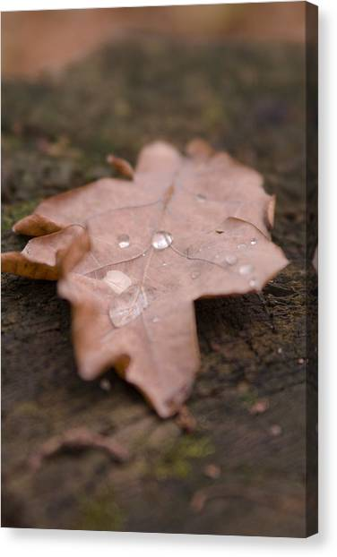 Dead Leaf Canvas Print by Mihail Antonio Andrei
