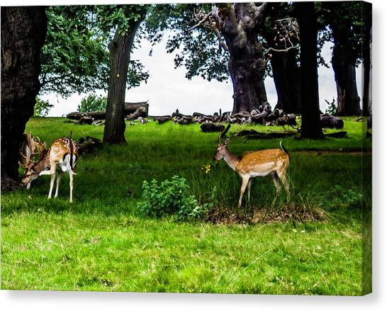 Deer In The Park Canvas Print