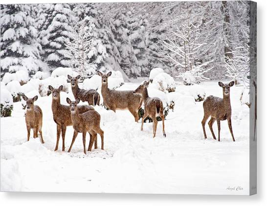 Canvas Print featuring the photograph Deer In The Snow by Angel Cher