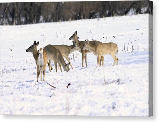 Canvas Print - Deer by Lori Tordsen