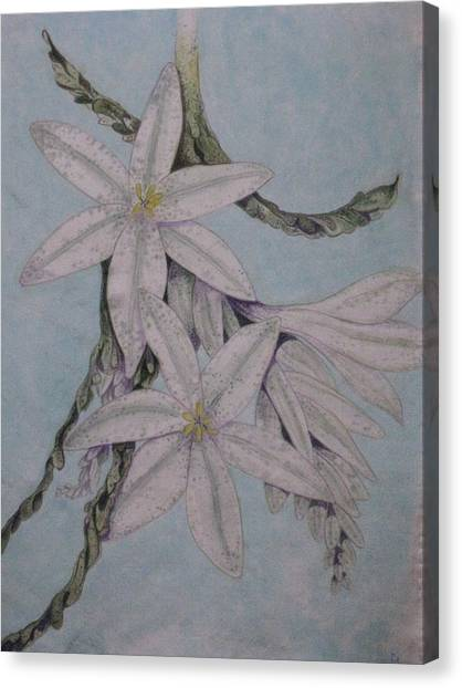 Desert Lillie Canvas Print by David Kelly