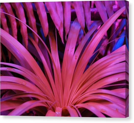 Dew Drop Pink Canvas Print by Florene Welebny