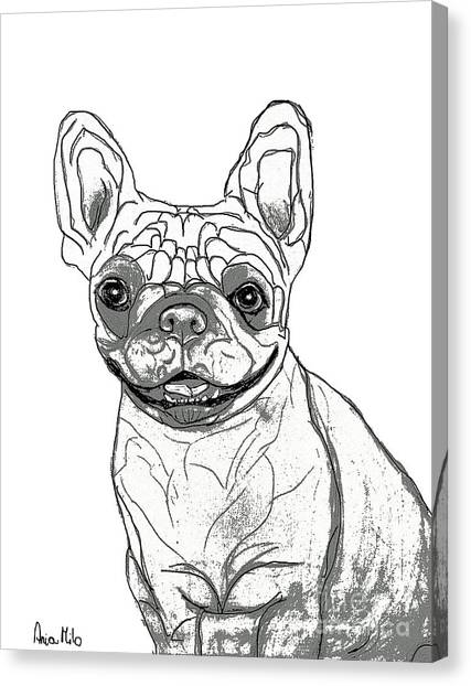 Ania Milo Canvas Print - Dog Sketch In Charcoal 7 by Ania M Milo