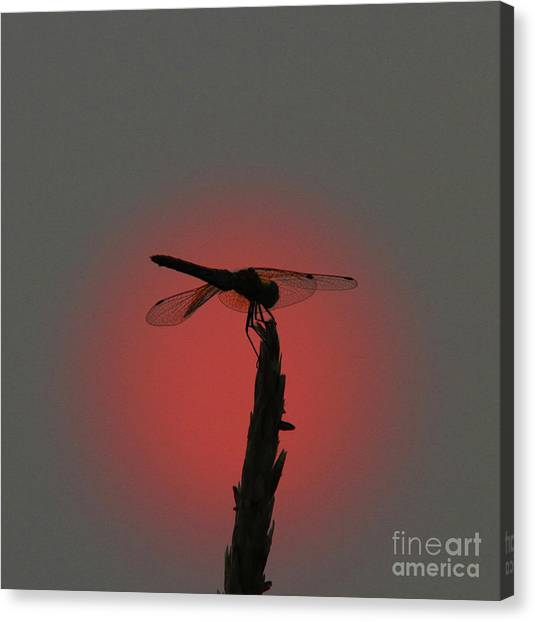 Canvas Print - Dragonfly Sunset by Gary Wing