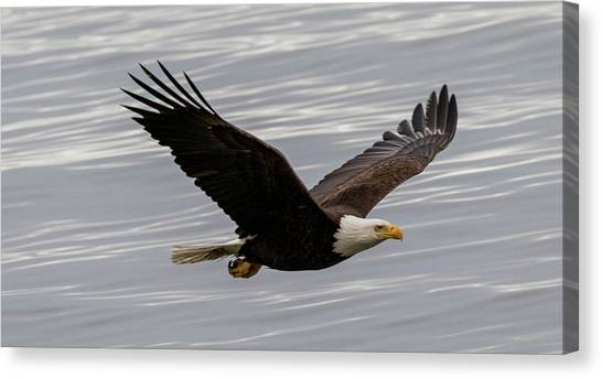 Eagle Soaring Over The Ocean Canvas Print